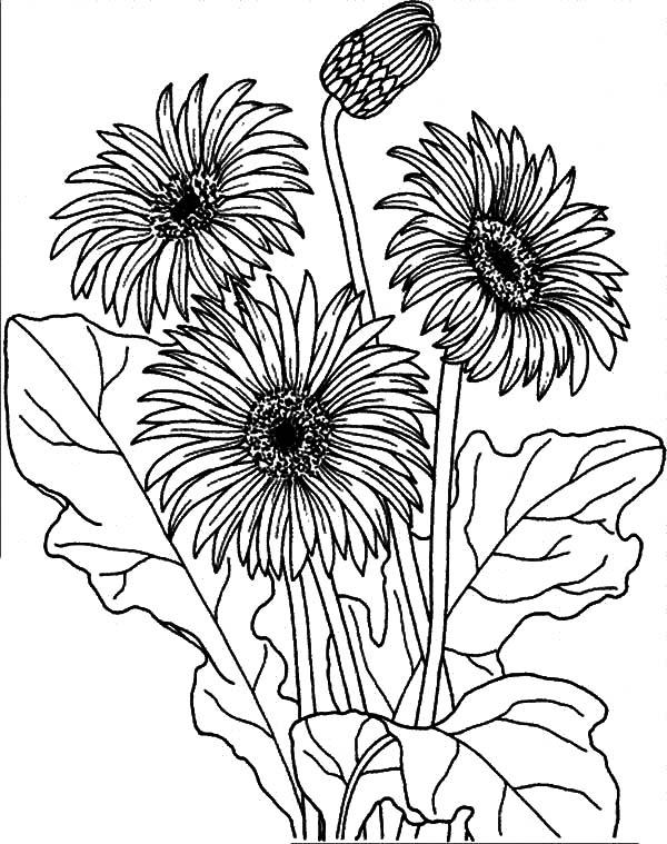 Garden Of Aster Flower Coloring Pages