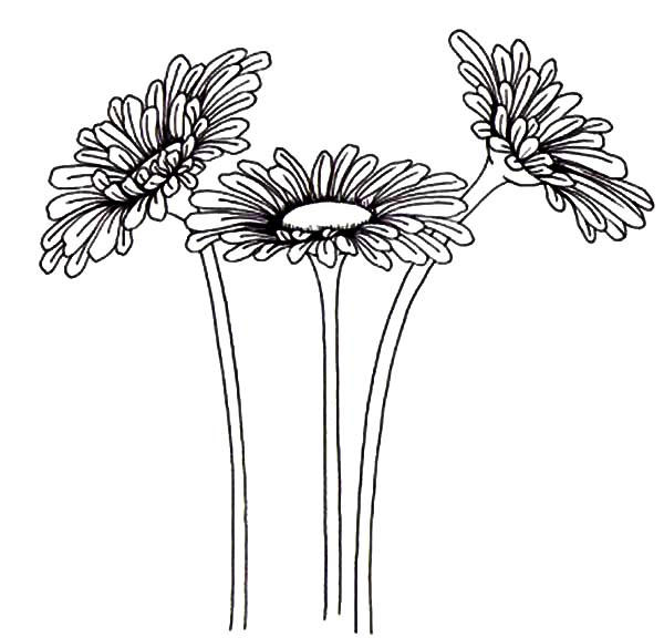 Gardening Aster Flower Coloring Pages
