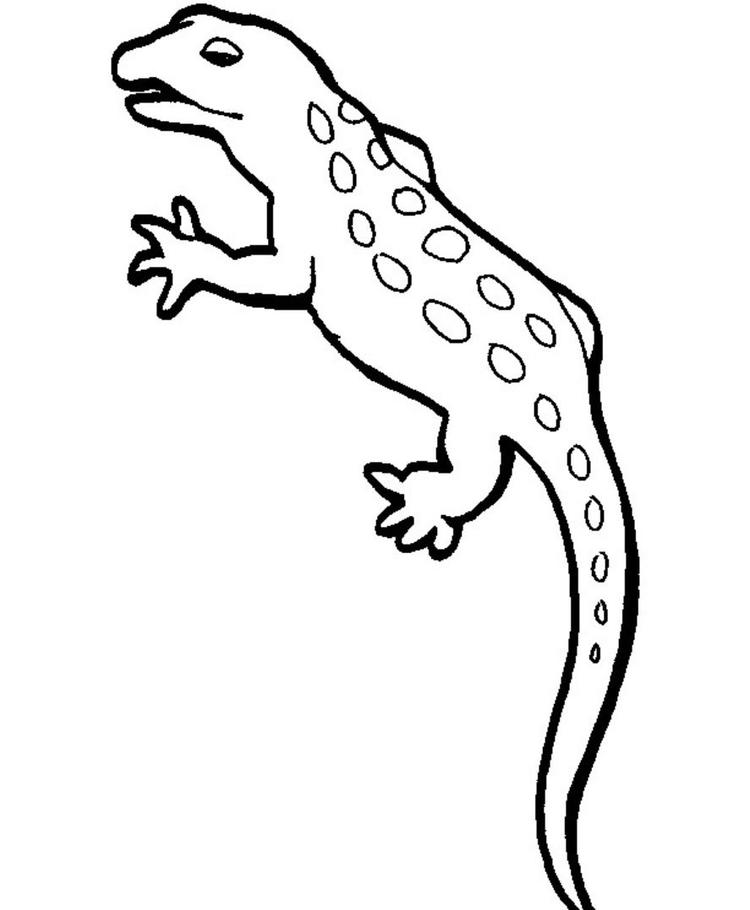 Gecko Coloring Pages Free