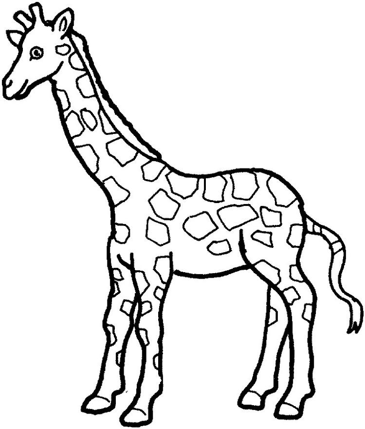 Giraffe coloring pages for print out