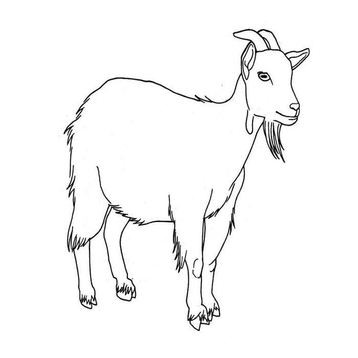 Goat Coloring Pages Easy