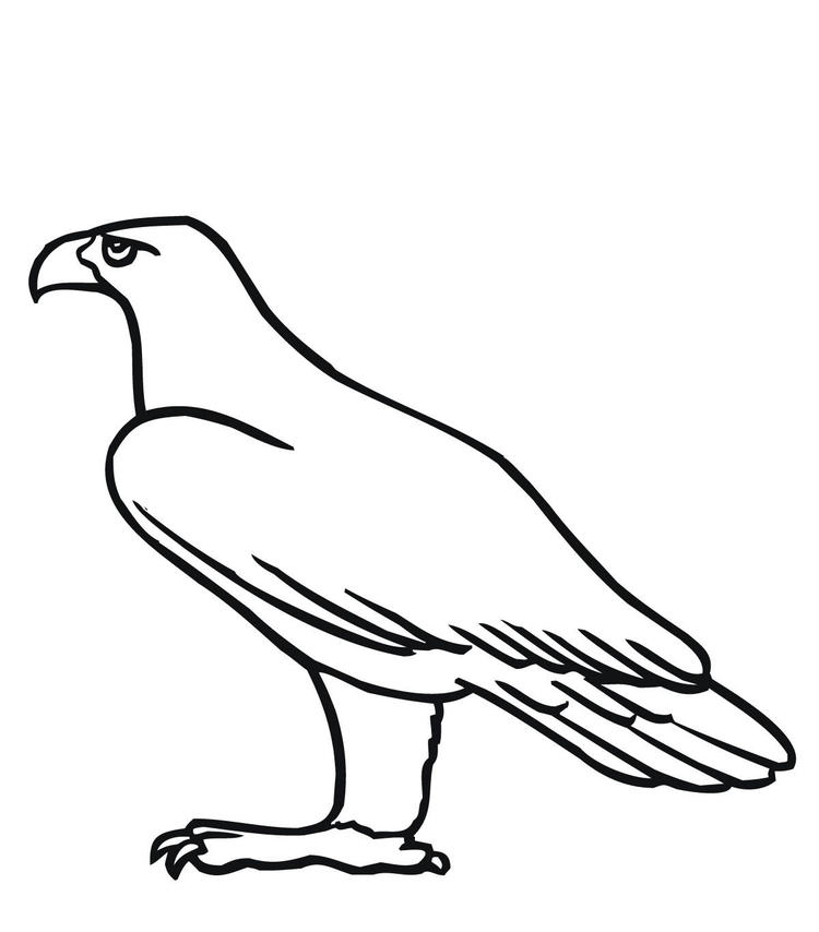 Golden Eagle Bird Coloring Page