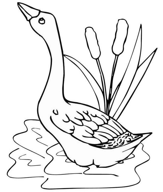 Goose In A Pond Coloring Page - Coloring Ideas