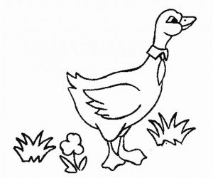 Goose printable animal coloring pages for kids