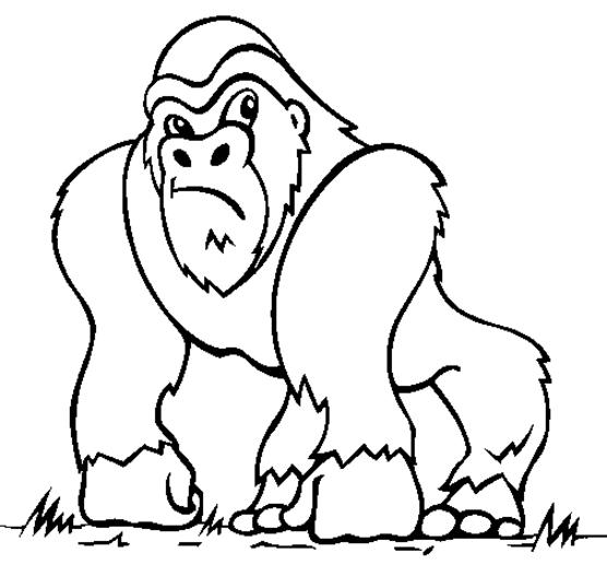 Gorilla Monkey Coloring Pages