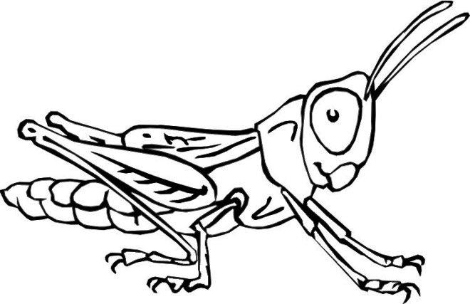 Grasshopper Bug Coloring Pages