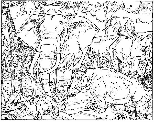 Great Adult Coloring Pages Printable Elephant