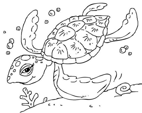 Green Sea Turtle Coloring Pages