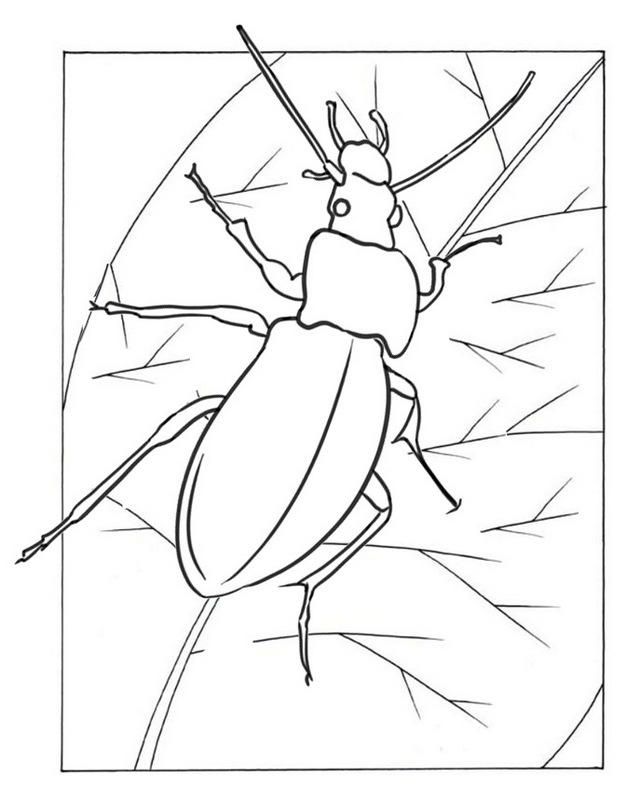 Ground Beetle Coloring Page