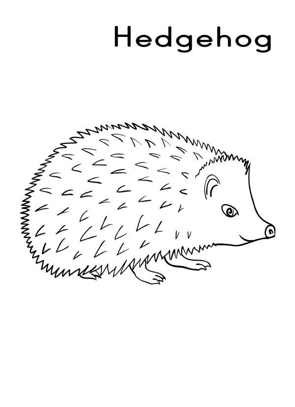 H Is For Hedgehog Colouring Pages