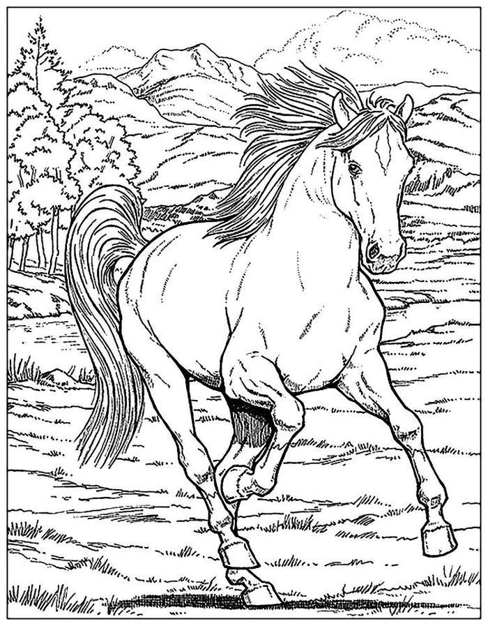Hard Horses Coloring Pages