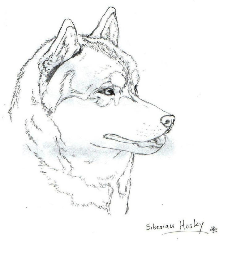 Head Realistic Husky Coloring Pages
