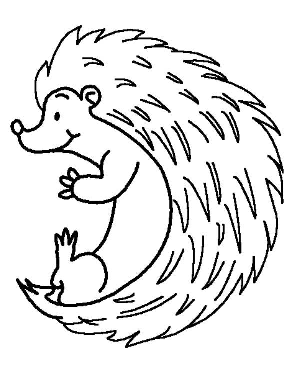 Hedgehog Colouring Pages For Kids
