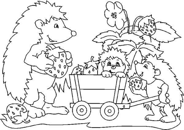 Hedgehog Harvest Strawberry With His Family Colouring Pages