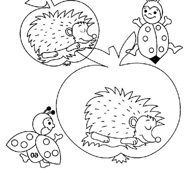 Hedgehog Sleeping Inside An Apple Colouring Pages