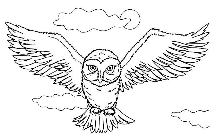 Hedwig Harry Potter Owl Coloring Pages