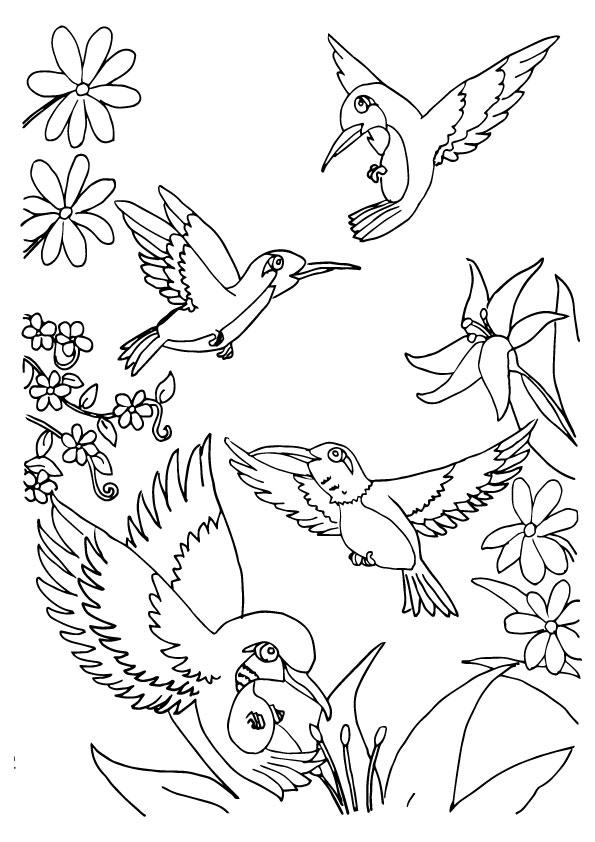 Herd Of Hummingbird Coloring Pages