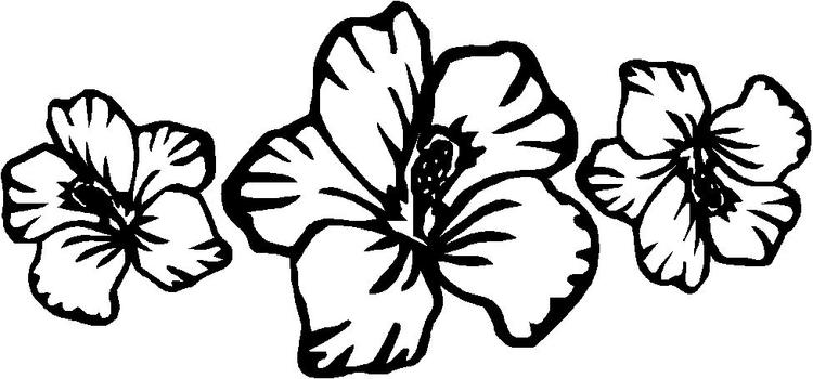 Hibiscus Flower Coloring Pages For Kids