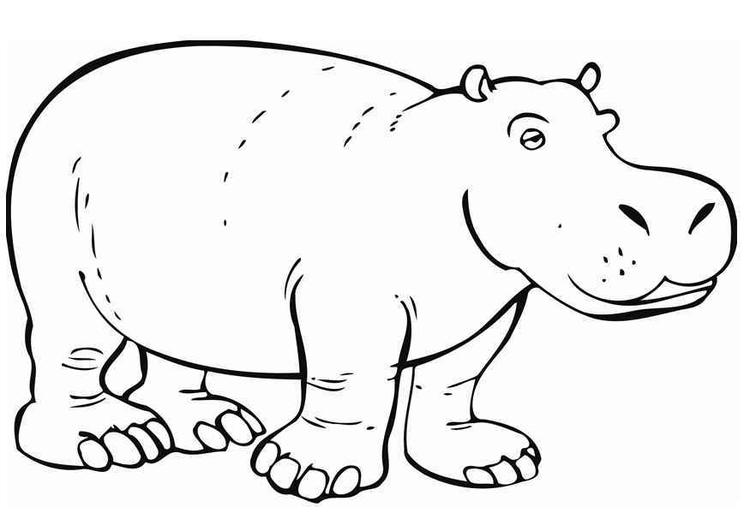 Hippo Coloring Pages To Print