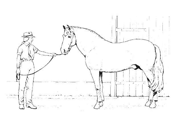 Horse Breeds Animal Coloring Pages