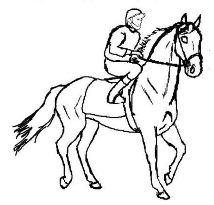 Horse Coloring Pages Advanced