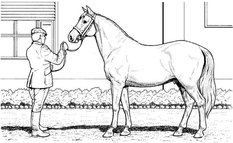 Horse Coloring Pages And Its Owner