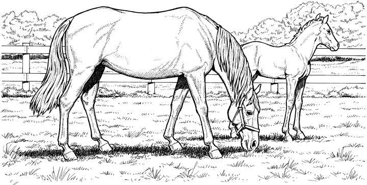 Horse Coloring Pages Eating Grass