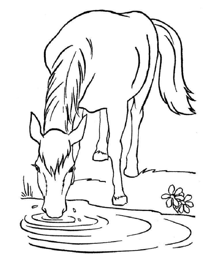 Horse Coloring Pages For Free To Print