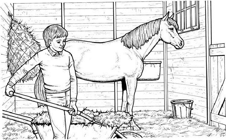 Horse Grooming Coloring Pages
