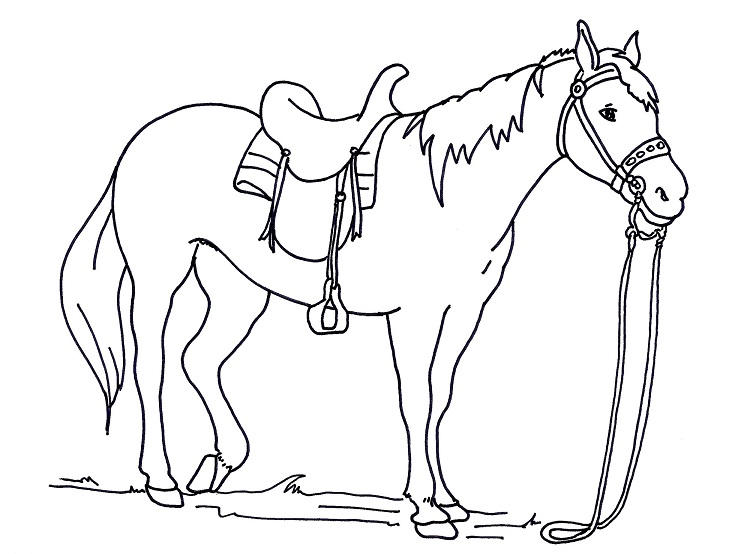 Horse Saddle Coloring Pages