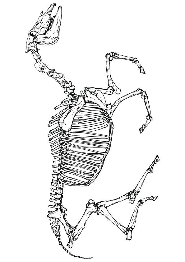 Horse Skeleton Coloring Pages