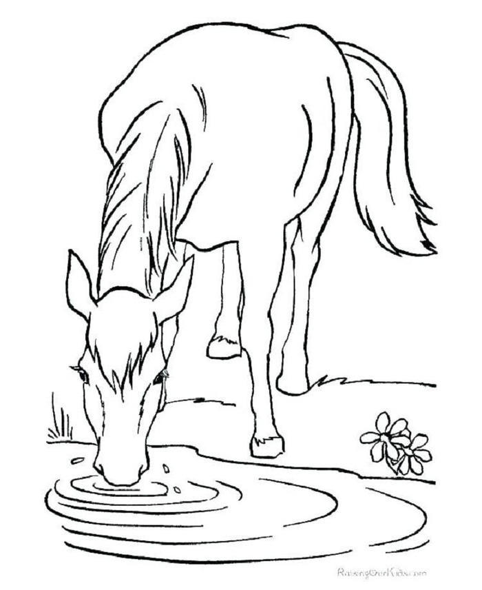 Horses Coloring Pages Online