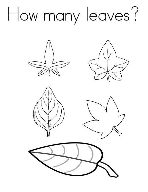 How Many Leaves Coloring Pages