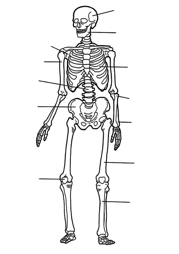 How To Draw Anatomi Of Bones Coloring Pages