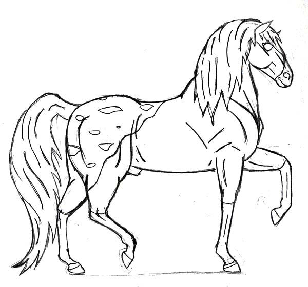 How To Draw Appalooshorse Coloring Pages