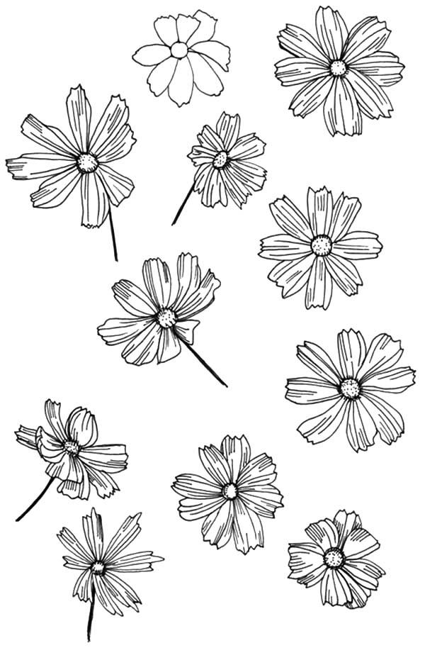 How To Draw Aster Flower Coloring Pages