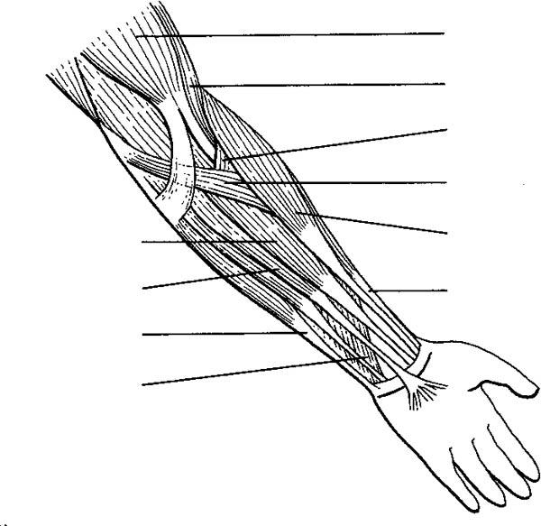 Human Anatomy Arm Coloring Pages