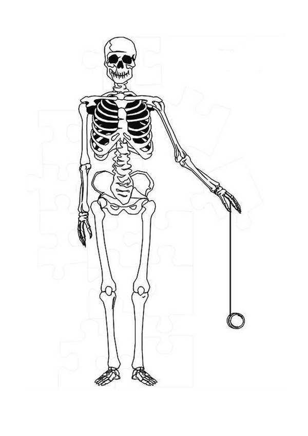 Human Anatomy Skeleton Coloring Pages