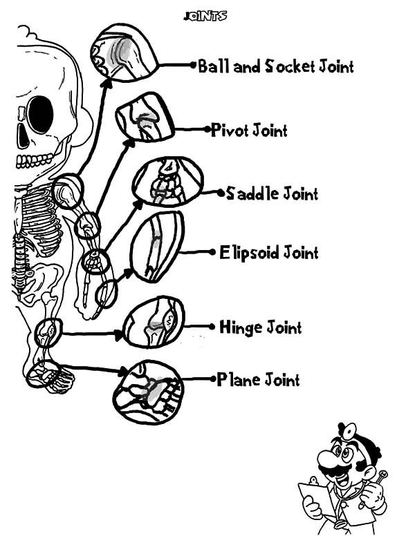 Human Hand Skeleton Anatomi Coloring Pages