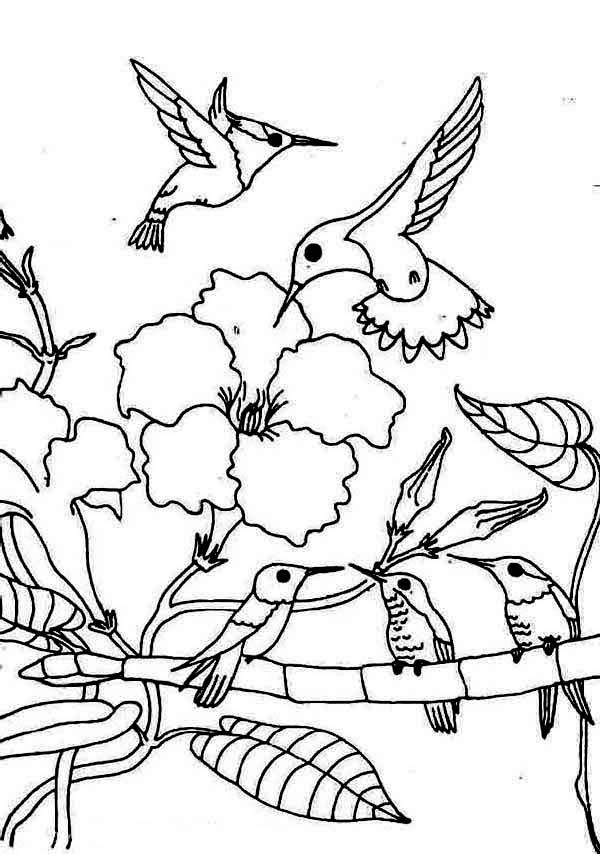 Hummingbird Coloring Pages Family