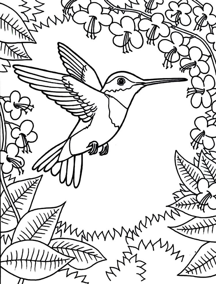 Hummingbird Coloring Pages Flowers And Leaves