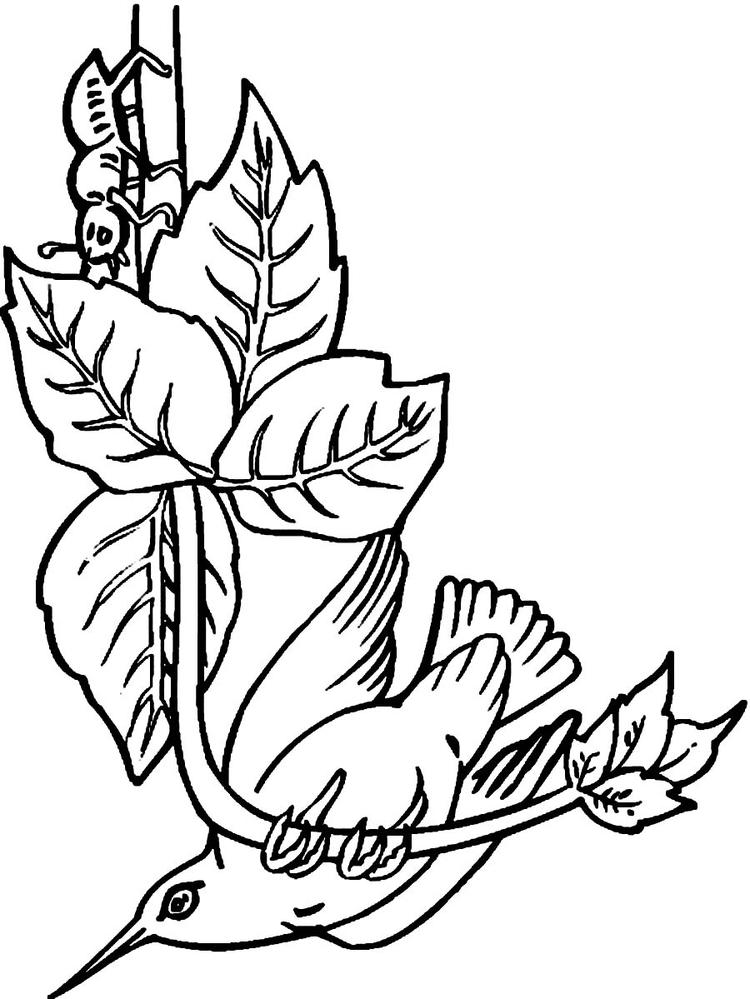 Hummingbird Coloring Pages Free Printable