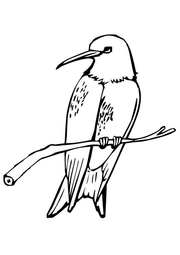 Hummingbird Coloring Pages Perched On Branch