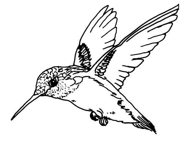 Hummingbird Coloring Pages Ruby Throated