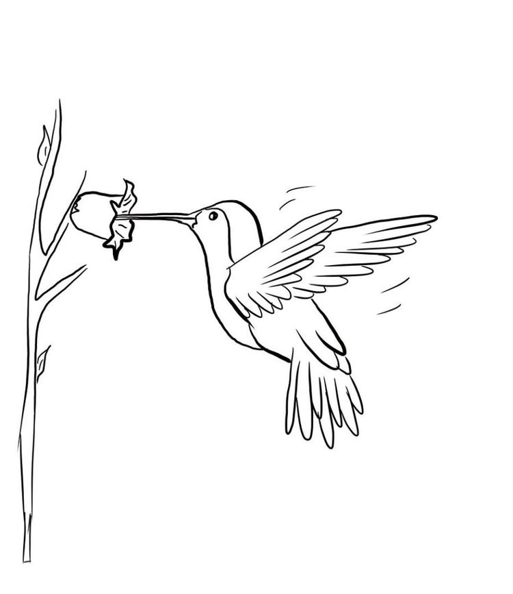 Hummingbird Coloring Pages Sipping Nectar - Coloring Ideas