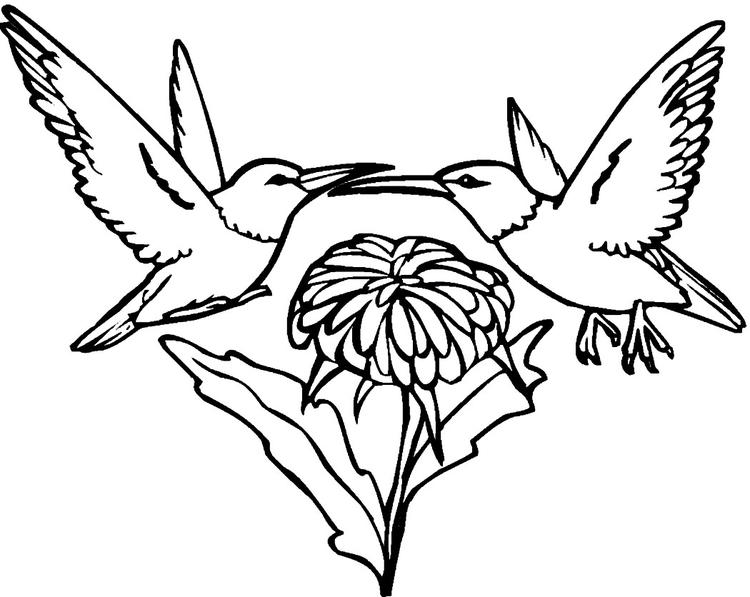 Hummingbird Coloring Pages Two Birds