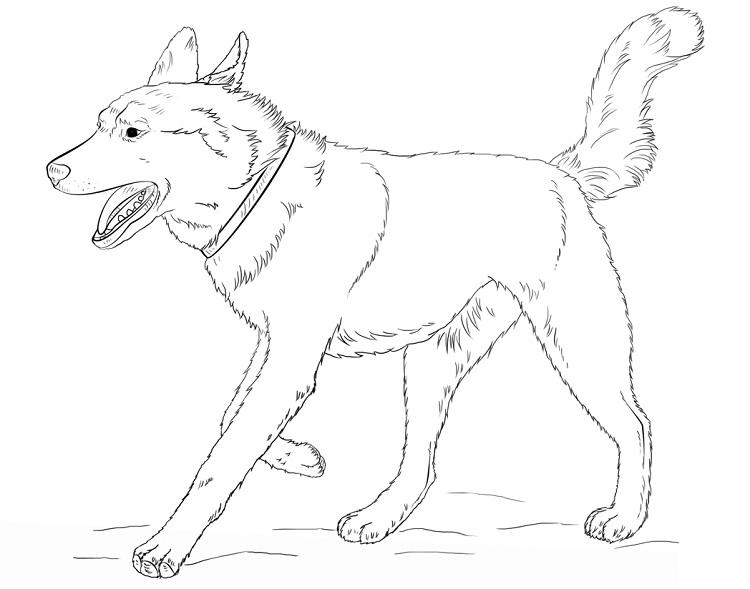 Husky Dog Coloring Pages
