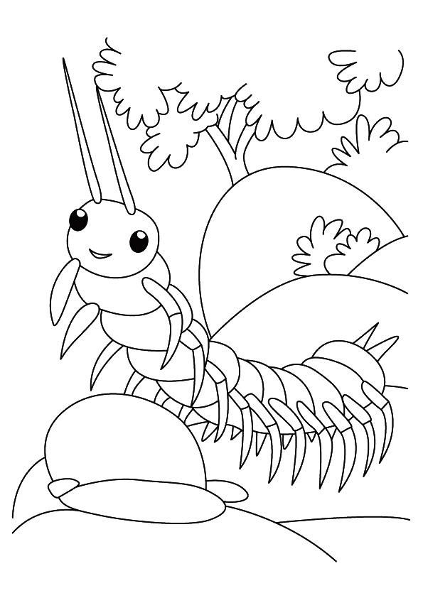 Insect Coloring Pages Centipede