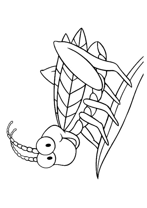 Insect Coloring Pages Cute Grasshopper