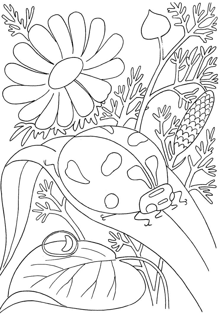 Insect Coloring Pages Ladybug On Leaf